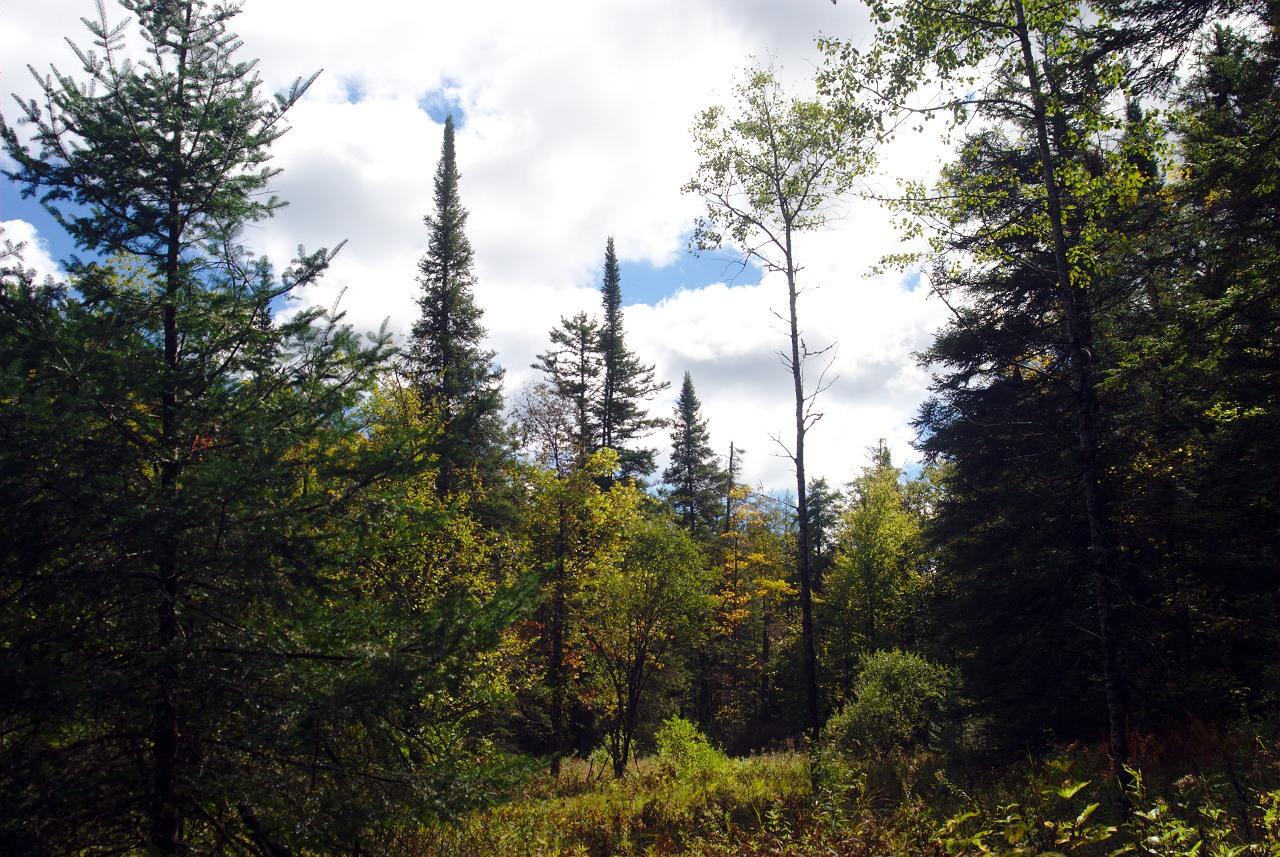 autumn-hardwick-trails-01