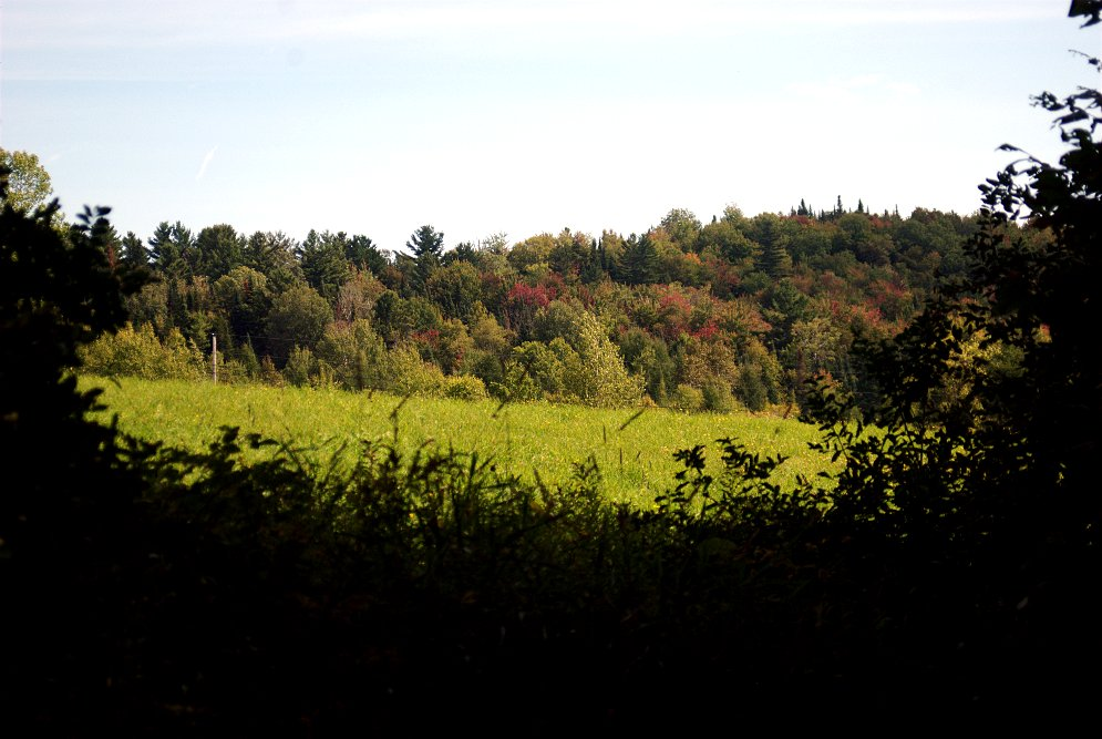 View of Shepard's Field from the Trails