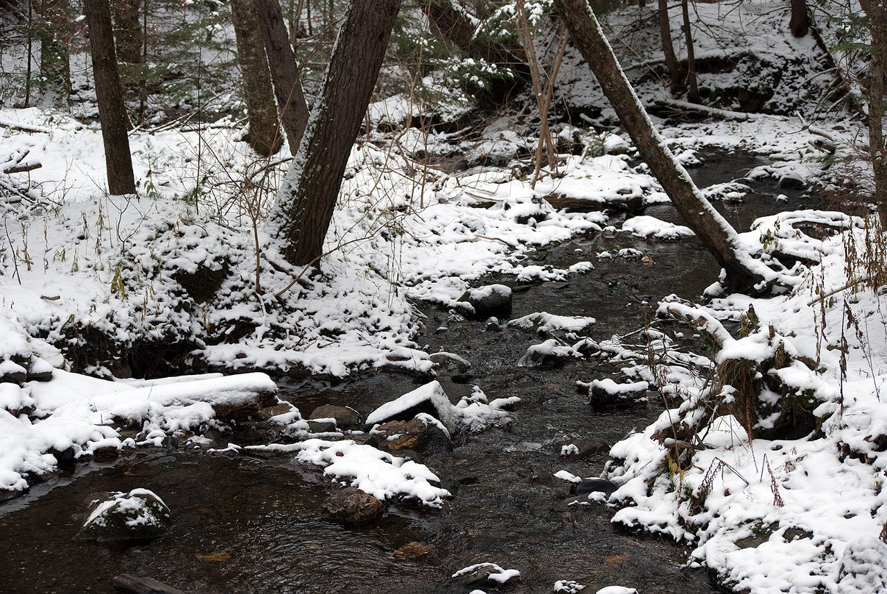 thanksgiving snow on the hardwick trails