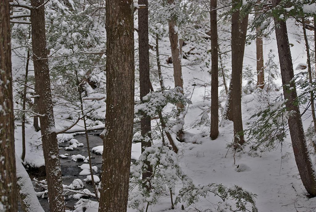 hardwick trails